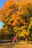 Autumn Exercising stock image