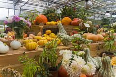 Autumn exhibition of fruits and vegetables. stock image