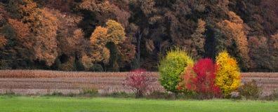 Autumn Expression Royalty Free Stock Photos