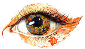 Autumn eye Stock Images
