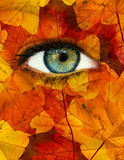 Autumn eye. Abstract female eye with autumn leaves royalty free illustration