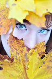 Autumn eyes Royalty Free Stock Image