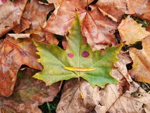 Autumn face Royalty Free Stock Photography