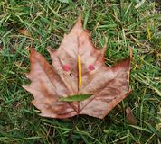 Autumn face Royalty Free Stock Images