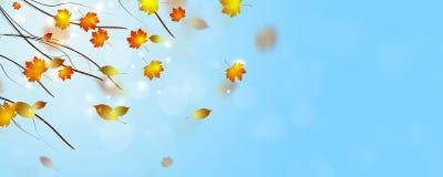 Autumn Fading Leaves fotos de archivo libres de regalías