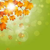 Autumn Fading Leaves imagenes de archivo