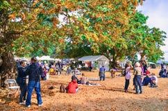 Autumn Fair During o fim de semana na ilha de Hornby imagens de stock