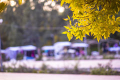 Autumn fair. And yellow leaves Royalty Free Stock Image