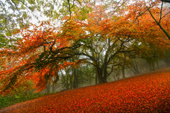 Autumn fairytale forest tree. Autumn season, fairytale forest with large tree