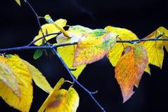 AUTUMN-FALL- закройте вверх ярких желтых листьев против темной воды стоковое фото rf
