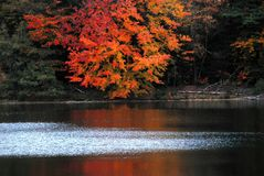 AUTUMN-FALL- красные листья отраженные в озере Коннектикут стоковые фото