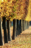 Autumn Fall Stock Image