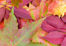 Autumn fall. Autumn leaves red gold brown colours background image Royalty Free Stock Image