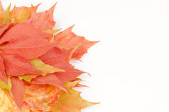Autumn fall. Autumn leaves red gold brown colours falling to the ground on a white background Stock Photos