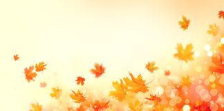 Autumn. Fall abstract background with colorful leaves and sun flares stock photos