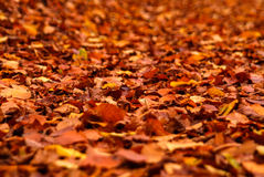 Autumn fall autumnal colored leafs yellow orange red on ground royalty free stock images