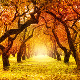 Autumn. Fall. Autumnal Park stock photography