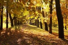 Autumn, fall background Stock Photo