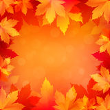 Autumn, fall background with bright golden maple leaves. Abstract illustration with bokeh lights. Blurred soft backdrop. Vector illustration. EPS10 Royalty Free Stock Photo