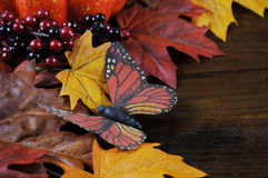 Autumn Fall background butterfly closeup Stock Images