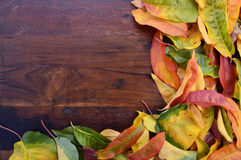Autumn Fall Background on Dark Wood. Royalty Free Stock Photography
