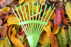 Autumn Fall Background with Green Rake. Royalty Free Stock Photos