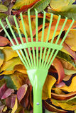 Autumn Fall Background with Green Rake. Royalty Free Stock Images