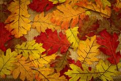 Autumn, fall, background of fall leaves stock image