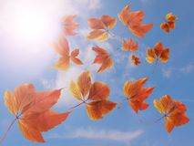 Autumn fall background. Many colorful red and orange autumn leaves falling down against blue sky and white clouds with sun rays - royalty free stock photography