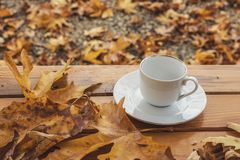 Autumn Fall Background med den retro lönn och koppen -, natur fotografering för bildbyråer