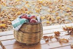 Autumn Fall Background med lönnlöv och äpplen royaltyfri bild