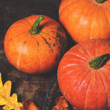 Autumn Fall background with pumpkins and  golden  leaves on rust Stock Image