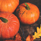 Autumn Fall background with pumpkins and  golden  leaves on rust Royalty Free Stock Image