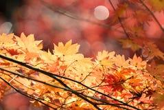 Autumn  fall background Stock Photos