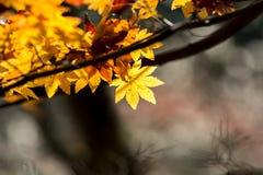 Autumn  fall background Royalty Free Stock Photos