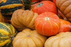 Autumn Fall background with Rire different organic pumpkins. Thanksgiving Day concept Royalty Free Stock Photo