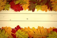 Autumn, fall, background on white knotty pine with leaves on top stock photography