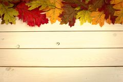 Autumn, fall, background on whitewashed knotty pine with leaves royalty free stock image