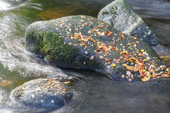 Autumn fall brown leaves on boulder in stream. Royalty Free Stock Image