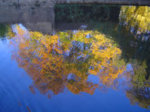 Autumn/fall in Cambridge. Reflection of Magdalene College trees in River Cam, Cambridge, in autumn Stock Image