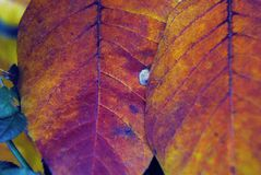 AUTUMN-FALL- Close Up of Vibrant Colored Leaves stock photo