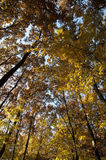 Autumn fall colored forest foliage Royalty Free Stock Photography