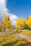 Autumn Fall Colors Stock Image