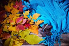 Autumn fall leaves and a warm blue scarf. Top view royalty free stock photography