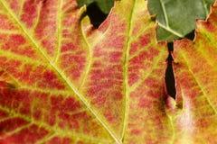 Autumn Fall Colours 11 royaltyfri foto