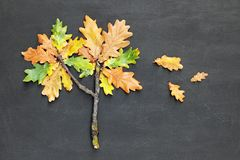 Autumn fall concept. Oak tree Quercus made from twig and yellow red leaves on blackboard background. Top view stock photos