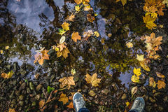 Autumn Fall concept - puddle with boots and leaves. Autumn season concept image of boots standing near rain puddle with colorful leaves Royalty Free Stock Image