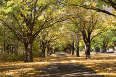 Autumn fall country path in park Stock Images
