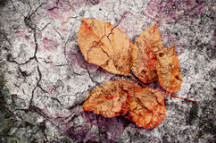 autumn fall cracked leaves texture background Royalty Free Stock Images
