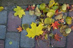 Autumn Fall deixa o fundo fotos de stock